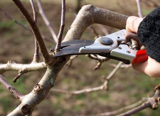 Monthly activity – Pruning & striking