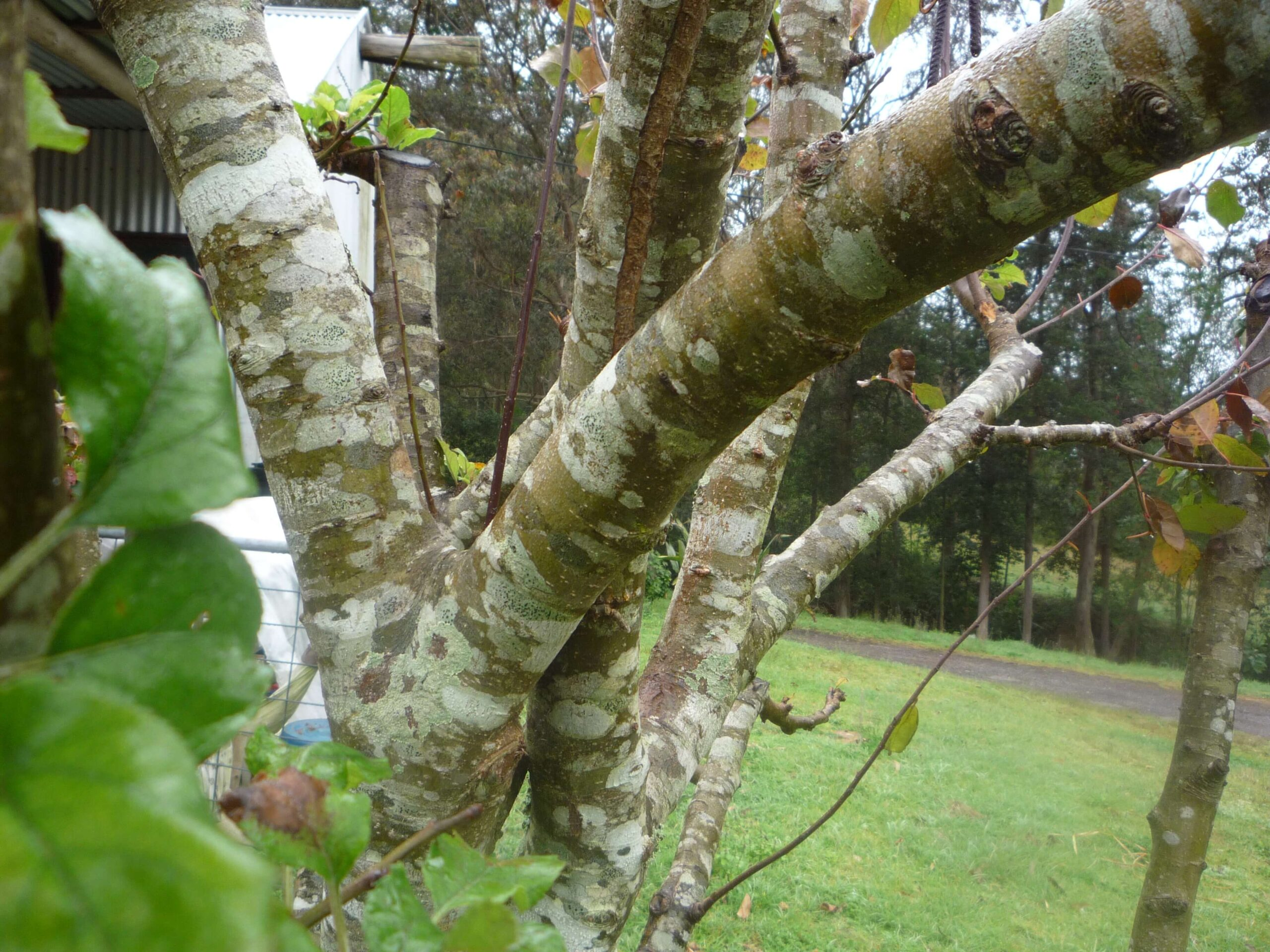 Monthly activity – Corrective Pruning