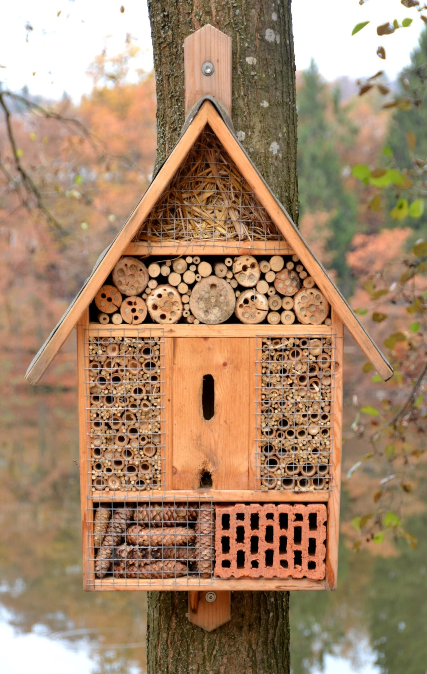 Building Insects Hotels