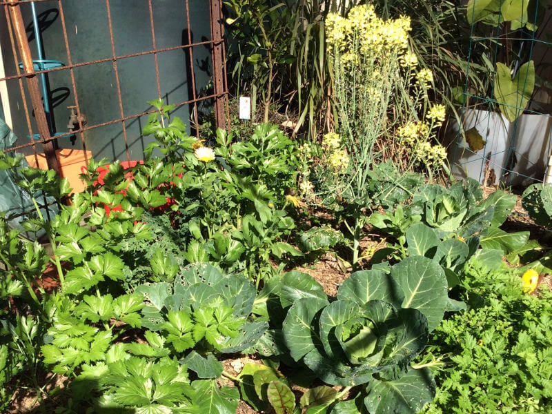 Garden tour and shared lunch at Pauline's