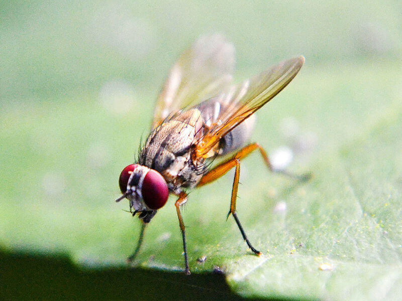 Information Evening - Fruit fly