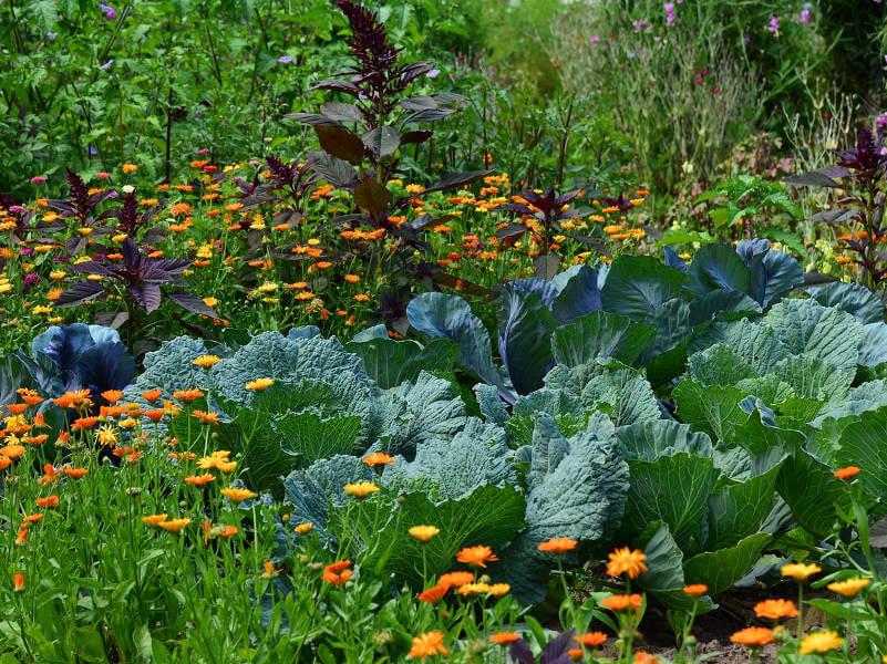 Garden Tour in Green Point