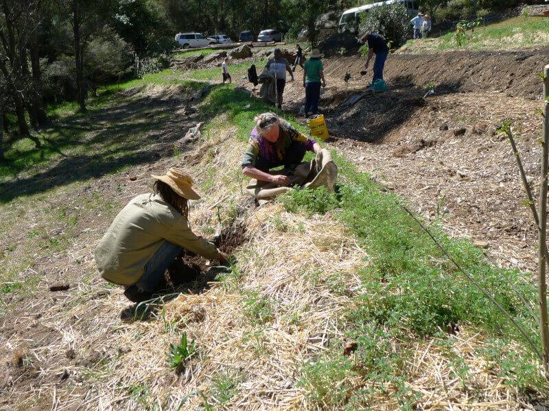 Information Evening - Establishing a Food Forest