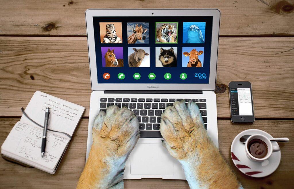 Video call on laptop computer between animals