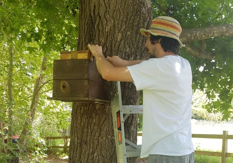 Ben working on a native bee hive tied to a tree
