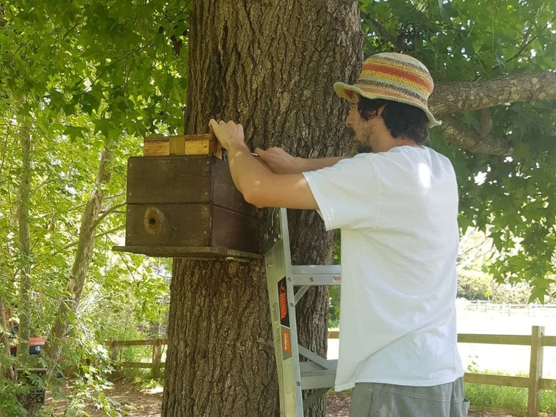 Hall Gathering - Pollinators and beneficial insects